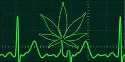 El consumo temprano de marihuana afecta el coeficiente intelectual