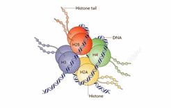 Histona 2
