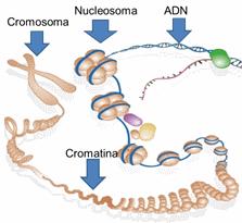 Histona