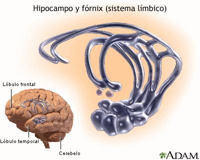 limbico