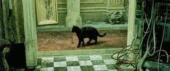 Gato de matrix